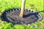 как укладывать декоративный щебень вокруг деревьев