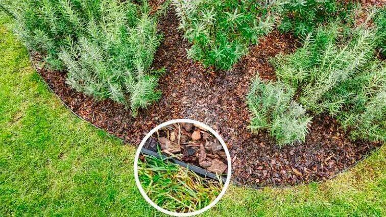 геопластборд, пластиковый бордюр для садовых дорожек и клумб, садовый пластиковый бордюр для приствольного круга деревьев66