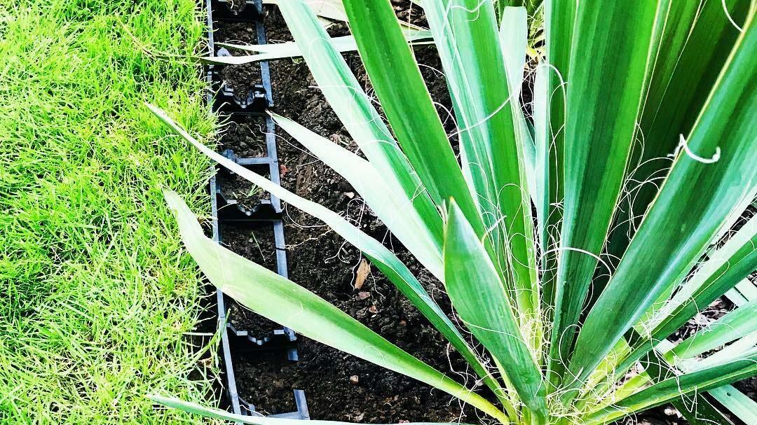 Садовый пластиковый бордюр Геоборд для клумб и садовых дорожек купить 3